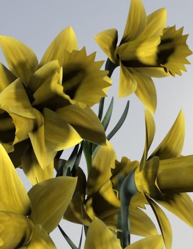 Digital Alchemy: Daffodil Image