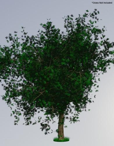 Digital Alchemy: Silver Maple