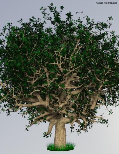 Digital Alchemy: White Oak