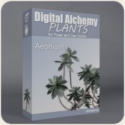 Digital Alchemy: Aeonium Image