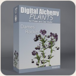 Digital Alchemy: Dames Rocket Image