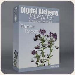 Digital Alchemy: Dames Rocket Image