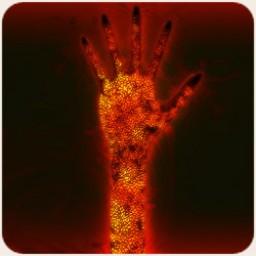 Demon Hand