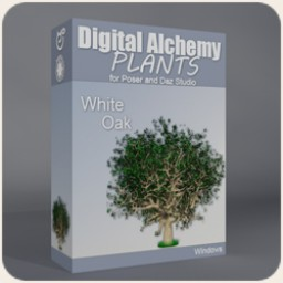 Digital Alchemy: White Oak