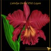 Cattleya Orchid PSD Layers