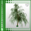 Willow Palm
